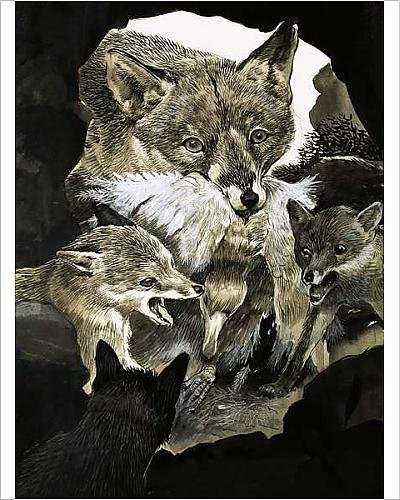 photographic-print-of-fox-delivering-food-to-its-cubs