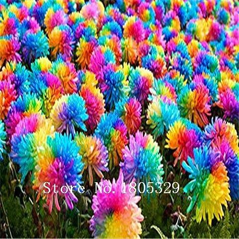 100pcs / bag Regenbogen Chrysanthemum Samen Blumensamen Seltene Blumen-DIY Hausgarten-Blumen niedrigen Preis