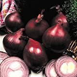 ONION - RED BARON - 1400 FINEST SEEDS