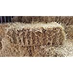 Fleet Farm™ Handy Size Barley Straw Bale - Feed Quality (90cm x 50cm x 40cm) 7