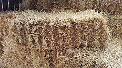 Fleet Farm™ Handy Size Barley Straw Bale - Feed Quality (90cm x 50cm x 40cm) 2