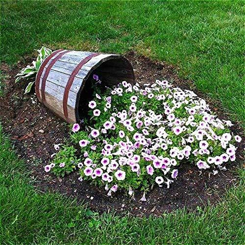 Shopmeeko 200 Stück Mixed Petunia Pflanzen hängen Bonsai Blume Pflanzen bringen Ihnen einen besseren Genuss Hausgarten mehrjährige Diy Blumentopf Samen: blau