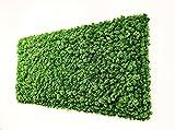 MOOSBILD MOOSWAND ISLANDMOOS preserved Moss Moos Wandbild Wandverkleidung Pflanzenbild Moosdeko Wanddeko Wandplatten Wandpaneele apfelgrün grün dunkelgrün echt stabilisiert konserviert (50x100, apfelgrün)
