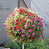 Mix Hängende Petunia Samen, seltene Sorte, robust, sehr schöne Garten-Blumen leuchten Ihrem Garten 100 Samen / pack Garten-Petunie A3