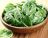 Semi di semi di spinaci - Spinacia...