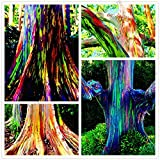 SwansGreen 105pcs/bag rare Rainbow Eucalyptus deglupta seeds,showy tropical tree seeds, eucalyptus for garden plant Ornamental