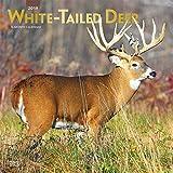 White-tailed Deer - Virginiahirsche 2019 - 18-Monatskalender (Wall-Kalender)