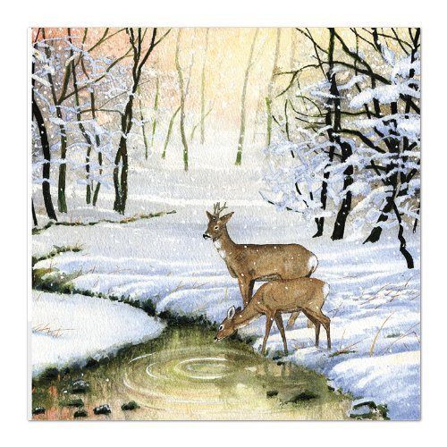Medici Charity Christmas Cards (MED6963) Pack Of 8 Cards - Deer In The Forest - In aid of the following Charities: Marie Curie Cancer Care, Parkinsons, CLIC Sargent, Oxfam, Lifeboats, Macmillan