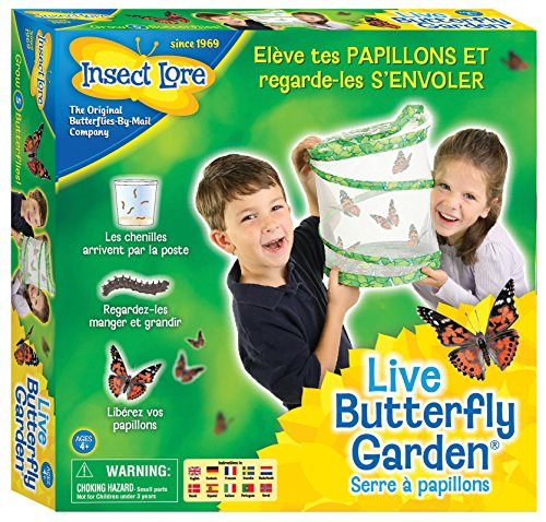 insect-lore-8010fr-elevage-papillons-vert
