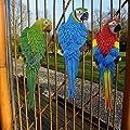 K7plus® - Papagei Ara 31 cm für Zaun, Wand und Balkon. In drei verschiedenen Varianten / Farben. Eine schöne Zaunfigur, Zaunhocker, Zaungast oder Deko Dekoration Gartenfigur. Für Balkon, Terrasse, Zäune, Wände, Sträucher und Bäume. von K7plus bei