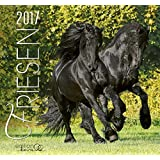 Friese 2017: Friesen Pferde