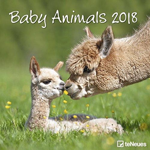 2018 Baby Animals Calendar- teNeues Grid Calendar- Animal Calendar- 30 x 30 cm