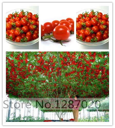 200 GIANT Tomatensamen Big Beef Hybrid Tomatensamen NO-GMO Gemüsesamen für zu Hause Garten Bepflanzung