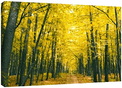 MOOL Large 32 x 22-inch Autumn Forest Canvas Wall Art Print Hand Stretched on a Wooden Frame with Giclee Waterproof Varnish Finish Ready to Hang, Yellow