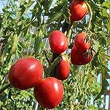 10 Samen Ochsenherz Tomate – Fleischtomate, sehr schnittfest