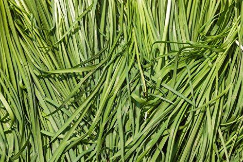 7.78g BIO Graines ~ Ciboulette Ail 1750ct ~ légumes en Asie coréenne Buchukimchi