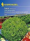Kiepenkerl Pflücksalat Lollo Bionda grün