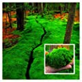 davitu 100/Pack Moos Samen Home DIY Bonsai Dekoration Gras Samen Topfpflanzen Samen von Davitu bei Du und dein Garten