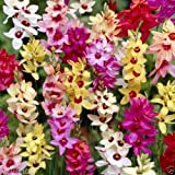 Pinkdose Ixias Bulbs Mix, known as African corn lilies, white, yellow, orange, pink, red. (10 Bulbs)