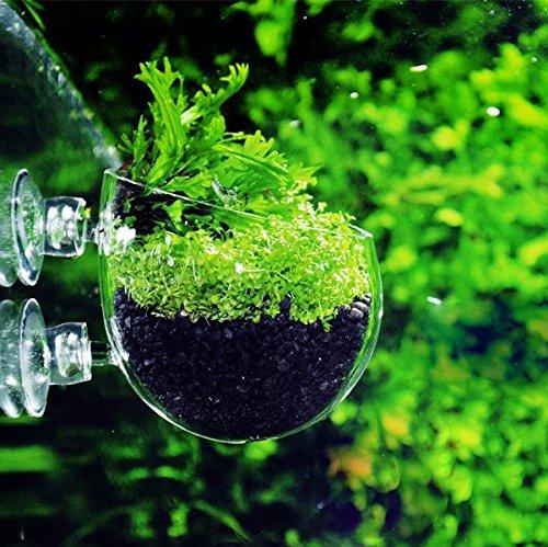 Q-Grow Pflanzschale Glas Deko Plant Pot für Aquarium Seitenwand