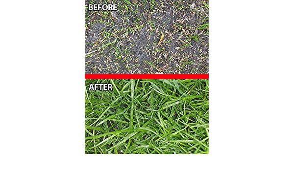 Grass Garden Outdoors Tough Uk Tailored For Lush Green Lawns In Sun Or Shade Hard Wearing Grass Seed Fast Growing Premium Grass Seed Quality Grass Seed