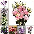 Fash Lady Bonsai 100 samen/pack Lisianthus 25 Farben Sammlung bonsai lisianthus Blume Für Hausgarten: gelb von Generic auf Du und dein Garten