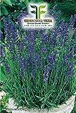 Lavendel Officinalis Samen