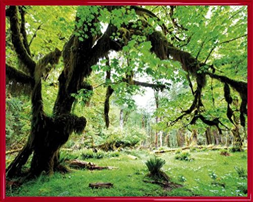 bosques-poster-impresion-artistica-con-marco-plastico-deep-green-forest-back-to-nature-50-x-40cm