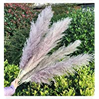 XINGXIAOYU Pampa grass natural beige and gray purple natural dry - from the wedding trend to draw the inner trend photography props wedding decoration home decoration