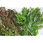 50 Bunched & Weighted Live Aquarium Plants - Aquatic Plants for your fish tank 7