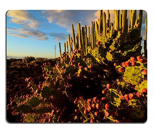 Preisvergleich Produktbild Liili Mauspad Naturkautschuk Mousepad Bild-ID: 34957514Calm Kaktus Wüste Sonnenuntergang in Teneriffa Kanarischen Insel