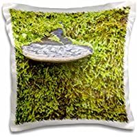 Danita Delimont - Fungi - WA, Tiger Mountain Forest, Shelf fungus, moss - US48 JWI2035 - Jamie and Judy Wild - 16x16 inch Pillow Case (pc_96124_1)