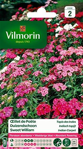 Vilmorin 5437442 Œillet Multicolore, 90 x 2 x 160 cm