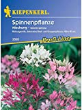 Cleome spinosa Spinnenpflanze Mischung