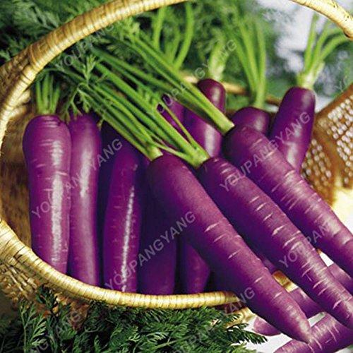 300pcs/sac parisien long carotte Semences non-OGM Semences Potagères Cuisine aide alimentaire extérieure Cache-pot pour jardin Effacer