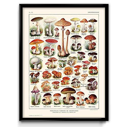 ¡Una de las cuatro representaciones espectaculares de setas, champiñones, hongos y mucho más!