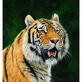 The Poster Corp David Stribbling – Mature Amur Tiger Fine Art Print (30.48 x 30.48 cm)