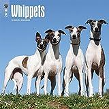 Whippets 2018 Calendar
