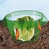 Tri Salatringe, 5 Stück, wirkungsvoller, ökologischer und hygienischer Schutz vor Schnecken | Schneckenkragen Schneckenzaun Schneckenabwehr