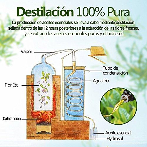 Innoo Tech 100% Natural Puro 8 * 10ml Aceites...