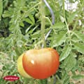 Tomatenspirale 20 Stk. H. 180 cm 10008 von bellissa - Du und dein Garten