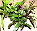 Bromelienmix 3 verschiedene Bromelien für Terrarien und Paludarien, Bromelie von 2110 bei Du und dein Garten