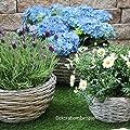 Pflanzschale aus Weide | rund | gewölbt | Farbe Velvet Affair | mit Folie ausgelegt | vers. Größen von Krenz - Du und dein Garten