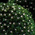 InnooTech LED Solar Lichterkette Außen Warmweiß Weihnachtsbeleuchtung Weihnachten party Garten 5 Meter 50er Blüten von Innoo Tech bei Lampenhans.de
