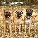 Bullmastiffs 2019 - 18-Monatskalender mit freier DogDays-App (Wall-Kalender)
