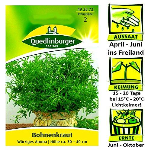 Trocknen Wurst (Quedlinburger Bohnenkraut würzig - Satureja hortensis / ideal zum einlegen & würzen / Ernte Juni bis Oktober)