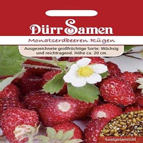Monats-Erdbeeren Rügen