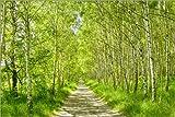 Posterlounge Leinwandbild 120 x 80 cm: Birkenwald von Atteloi - fertiges Wandbild, Bild auf Keilrahmen, Fertigbild auf Echter Leinwand, Leinwanddruck
