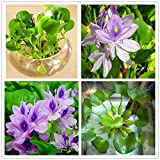 Product type: bonsai, size: small, medium, climate: temperate, use: outdoor plants, classification: happy farm, style: perennial, applicable constellation: pisces, location: courtyard, variety: flower, function: beautifying, flowerpot: exclud...