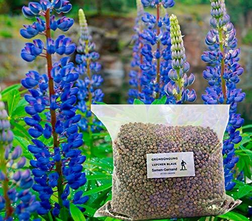 Lupinen Blaue Gründüngung Samen 25 kg Frische Saat